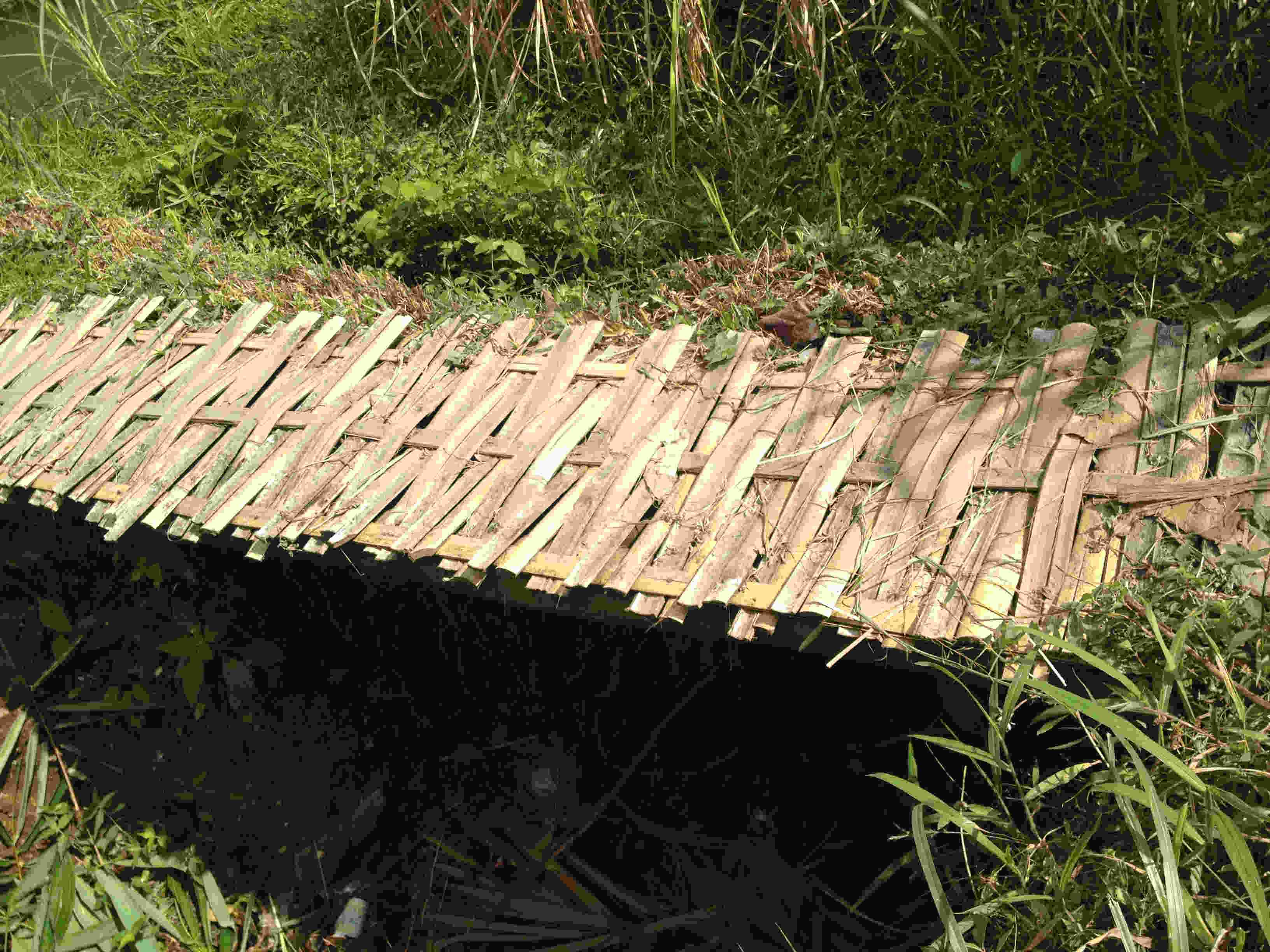 bamboo-bridge
