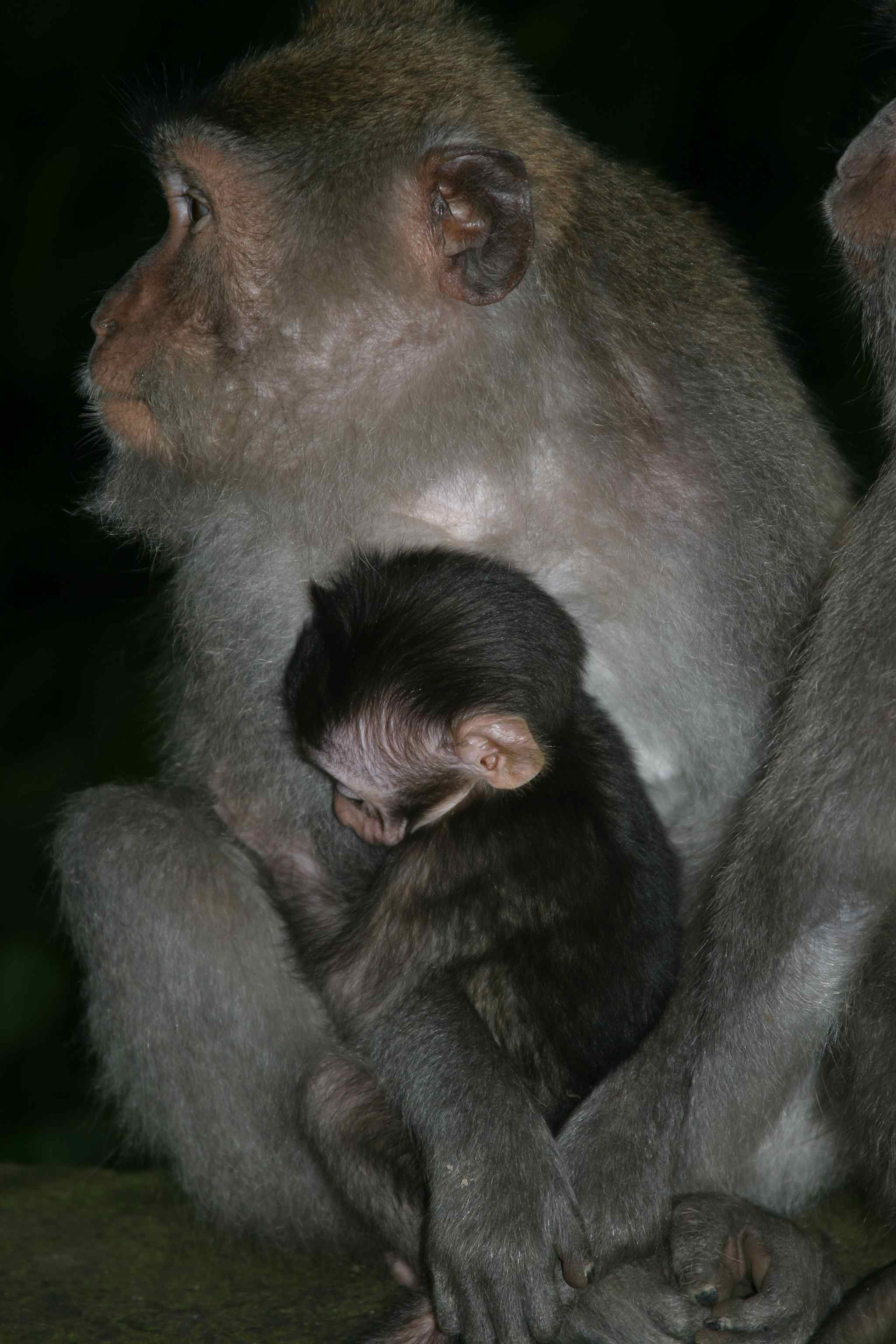 monkey-and-baby-three