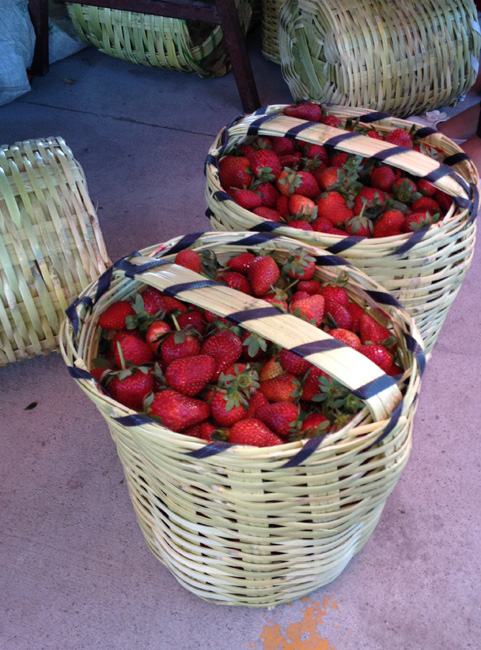 berry baskets-650