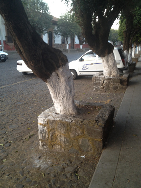 limed tree