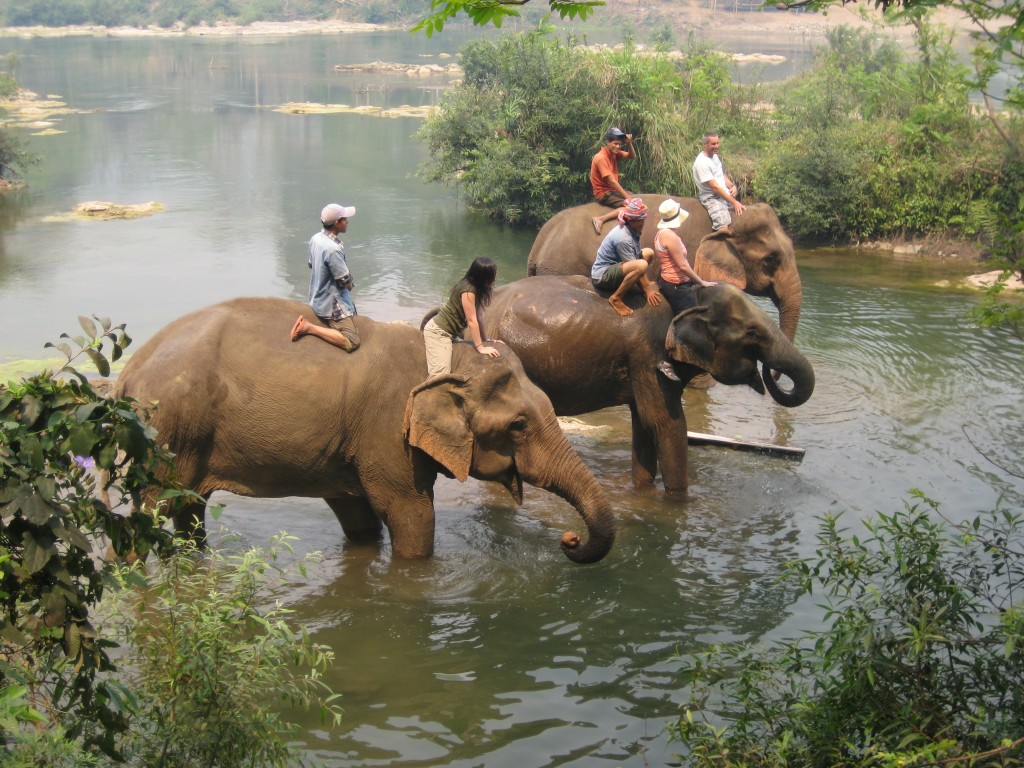 riding-elephants-vietnam