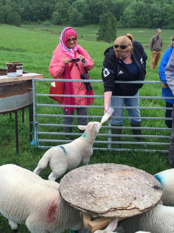 larae-feeding-lamb