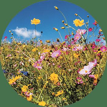 kripalu-flowers