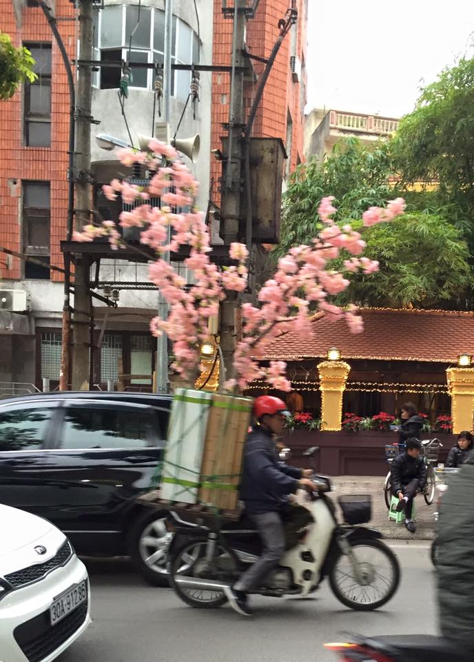 pink-tree-scooter