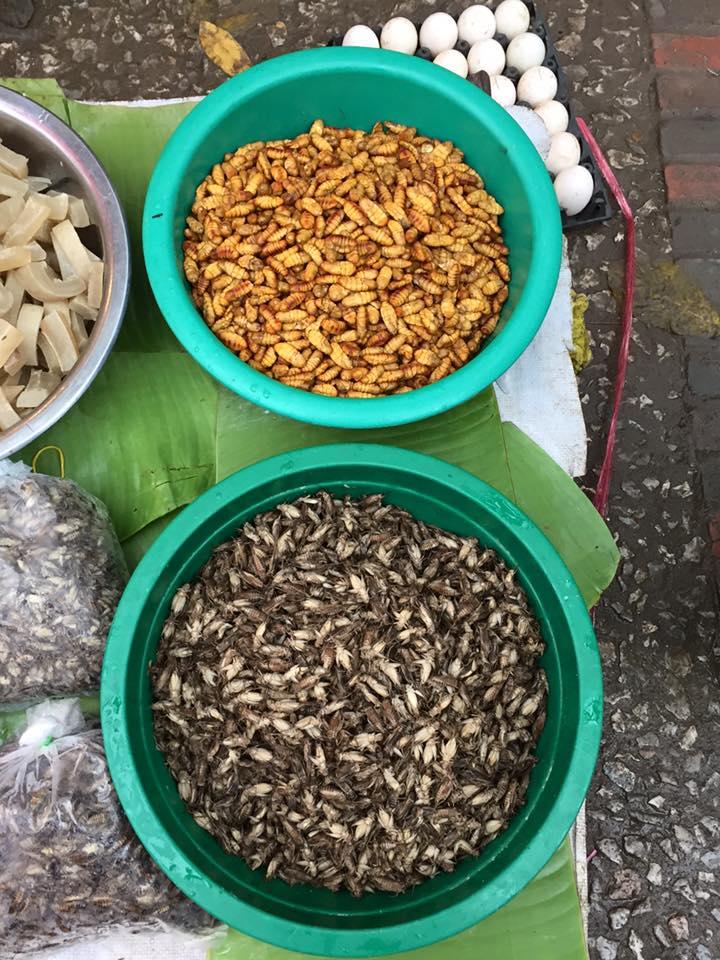dreid-silkworms-crickets-buffalo-skins