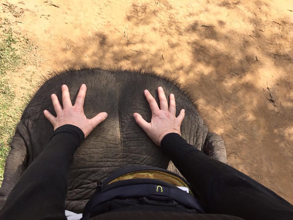 elephant-eye-view