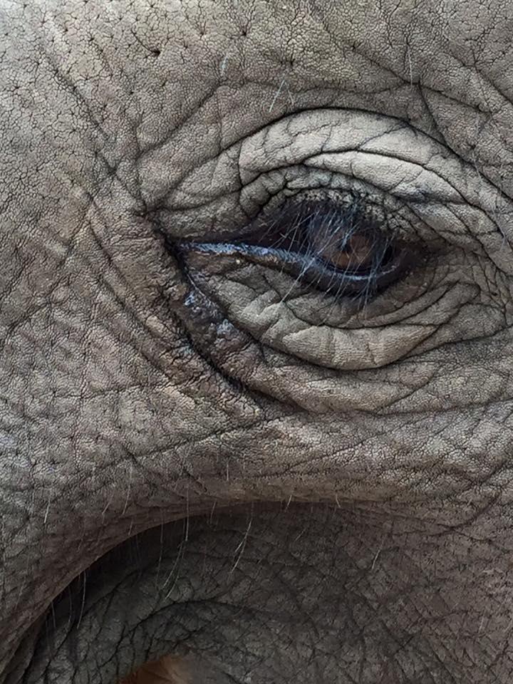 eye-lephant