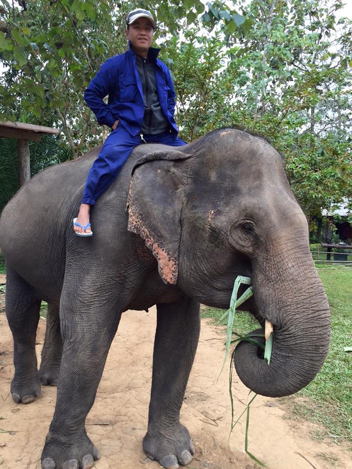 first-glimpse-elephant