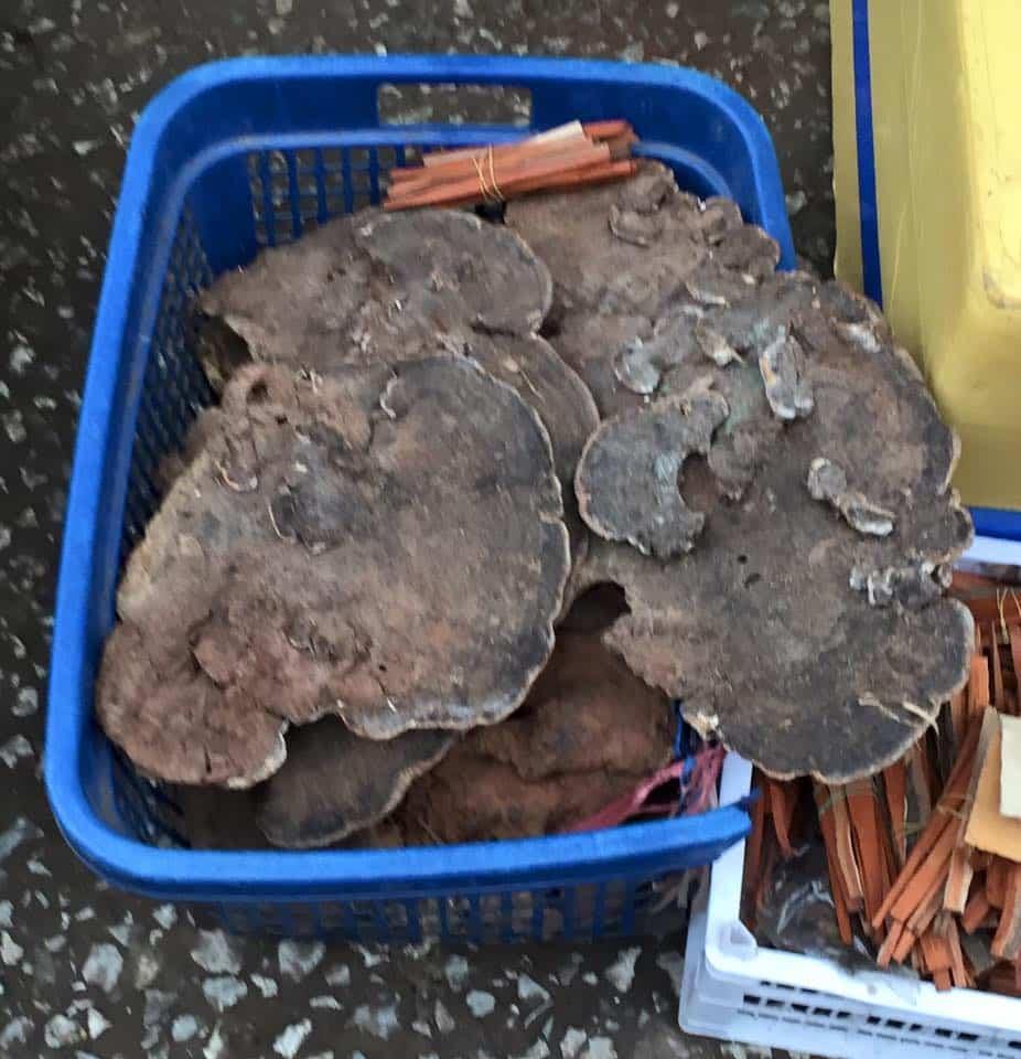 giant-fungus