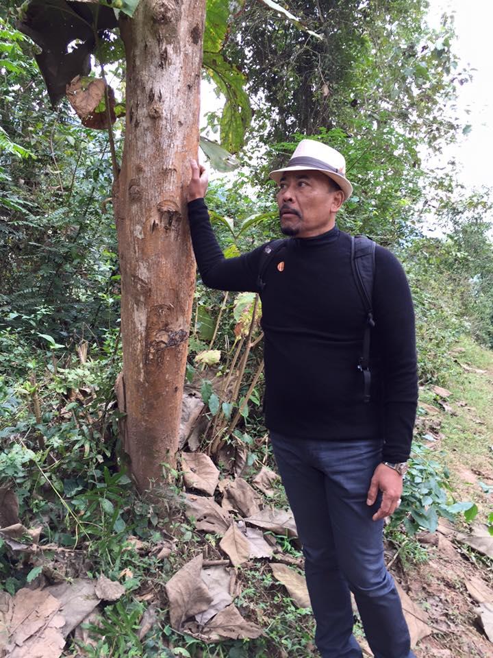 surya-teak-tree