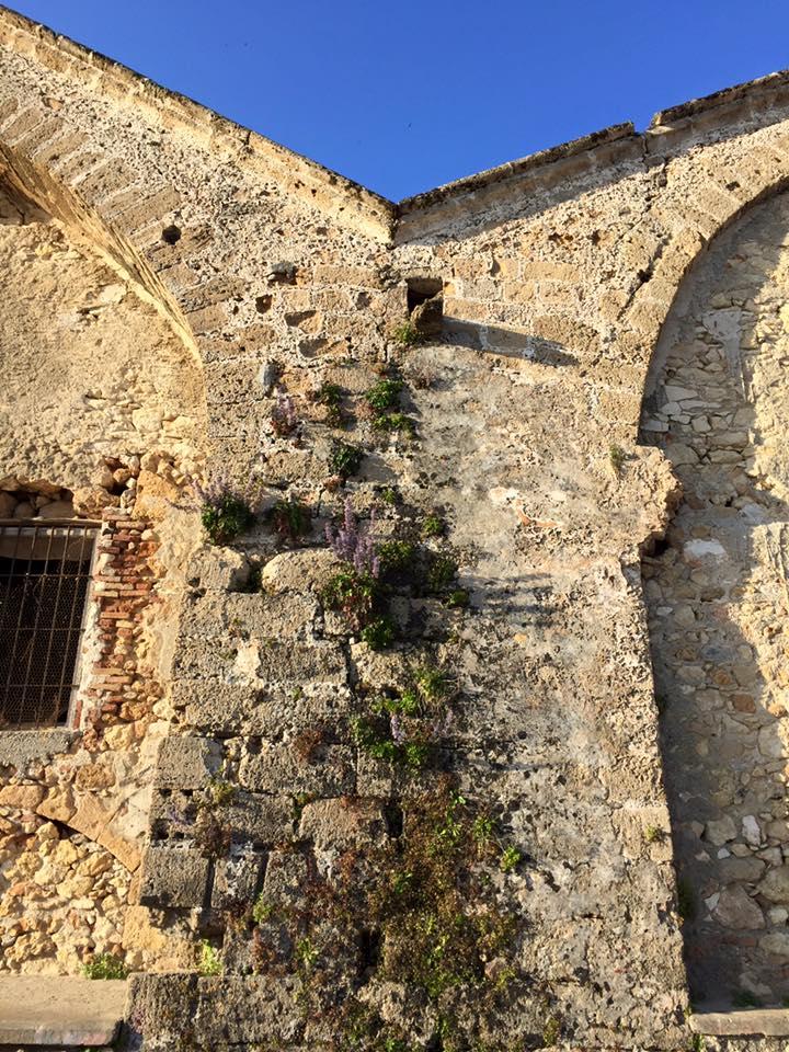 laura-davis-greece-chania-flowers-in-wall