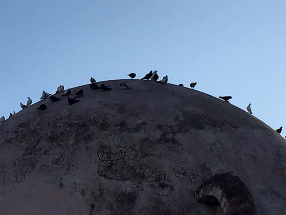 laura-davis-greece-chania-pigeons