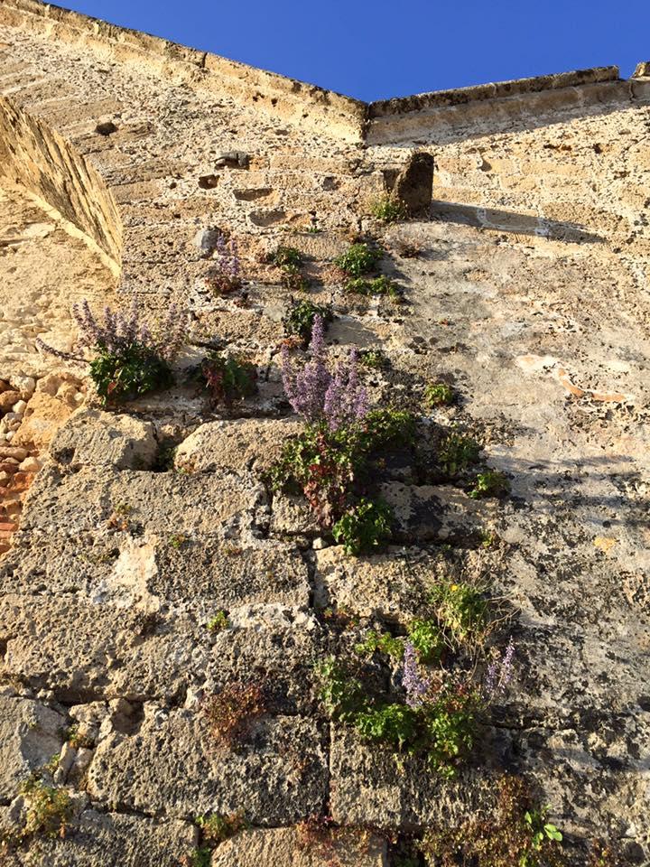 laura-davis-greece-chania-wall-floweers-closer