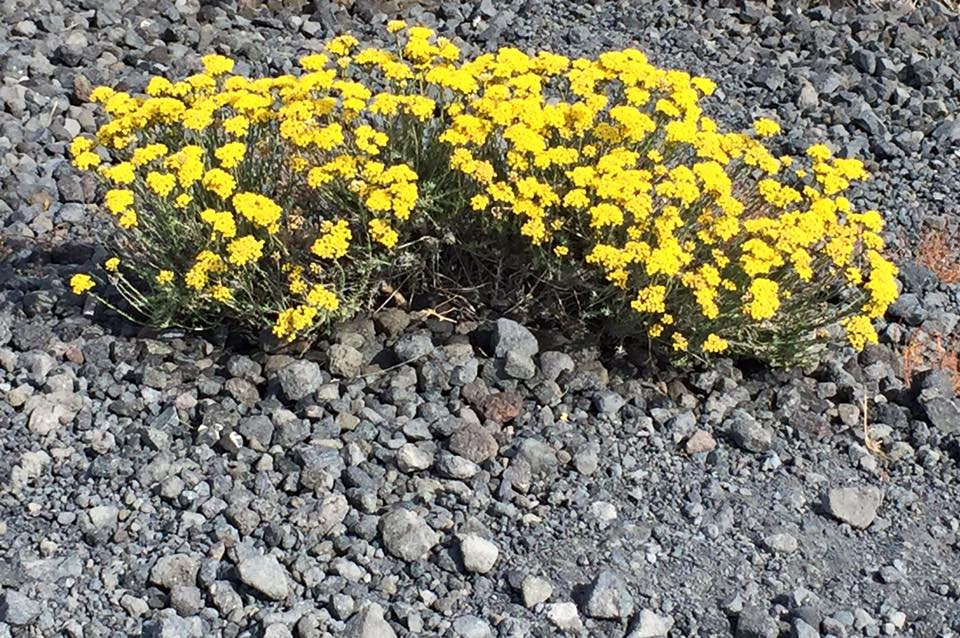 laura-davis-greece-persistent-flowers