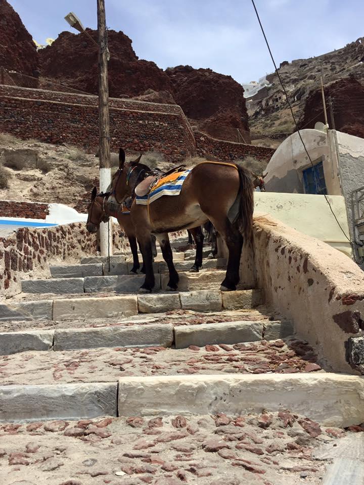 laura-davis-greece-santorini-donkeys