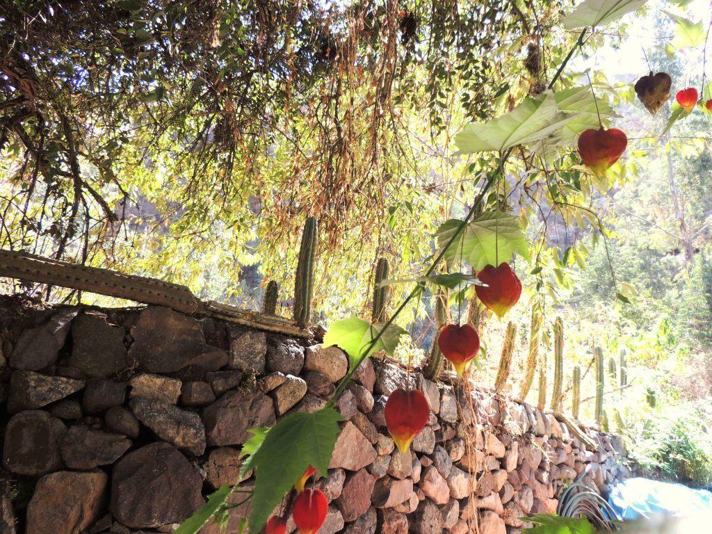 sacha-munay-wall-plant-1829-peru-laura-davis-maybe