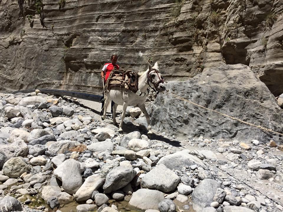 laura-davis-greece-samaria-gorge-donkey-pipe-pulling
