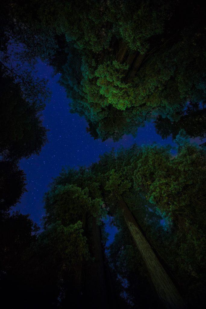 LD-1440-trees-night