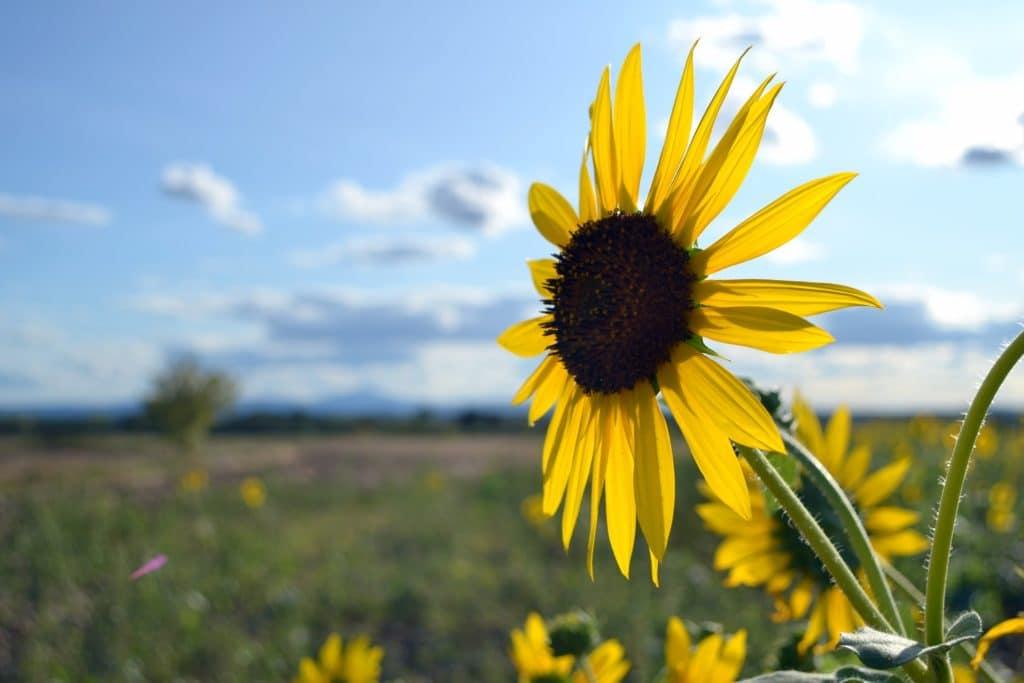 flower-2800820_1920
