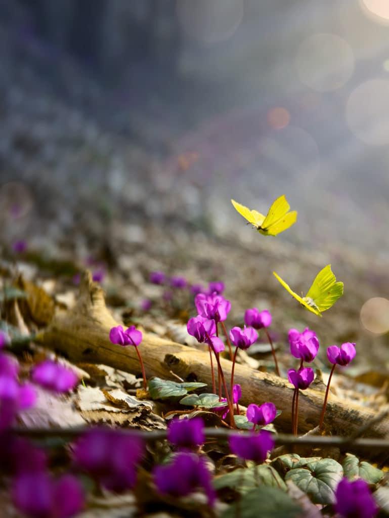Spring forest or garden  landscape;  wild Spring flower and fly butterfly; nature landscape background. Garden flower.