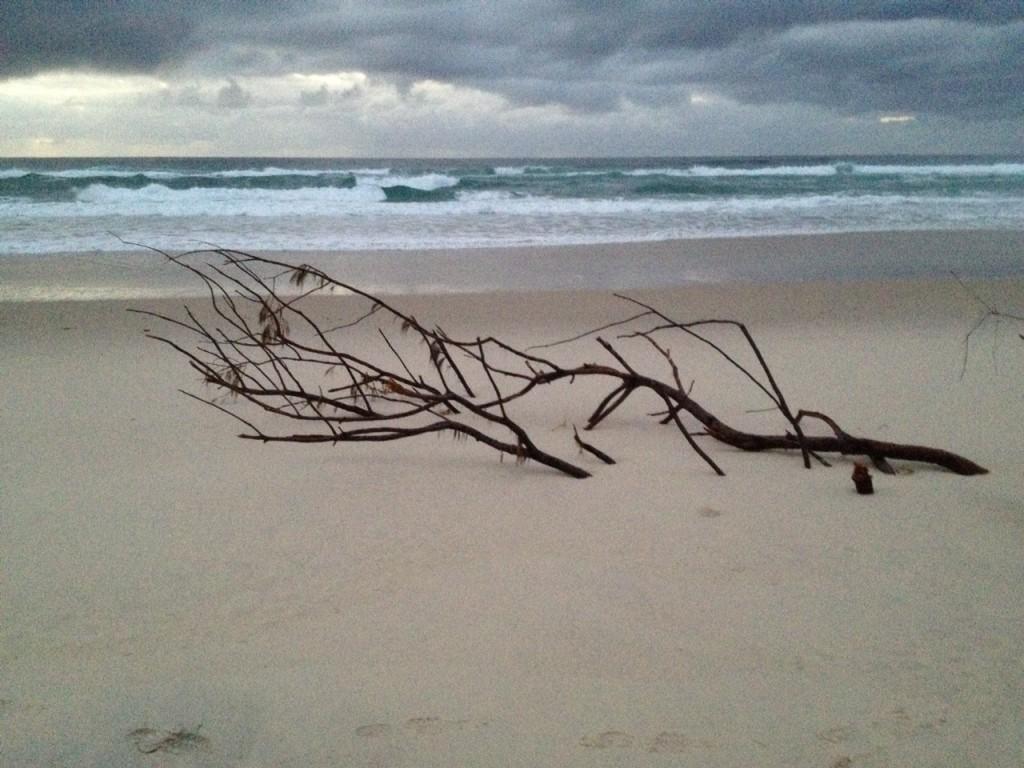 Causarina beach